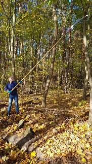 Bäume beschneiden