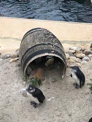 Die Pinguine machen Mittagsschlaf