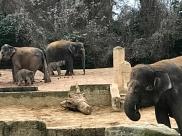 Elefanten sind überraschend groß!