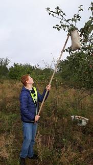 Lukas angelt Äpfel