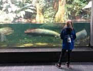 Riesenfische
