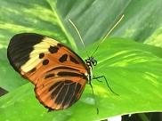 Schmetterlingsfarm
