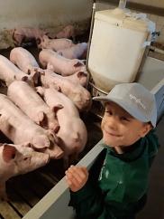 Schweine sind toll